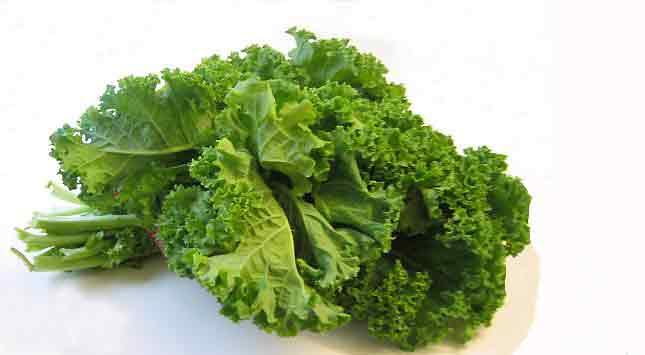 Kale, Curly Kale, or Scottish Kale