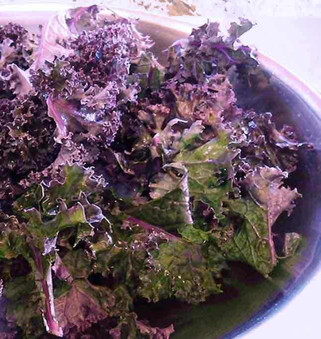 Russian or Red Kale